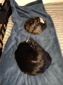 kommune kittehs on the love blanket