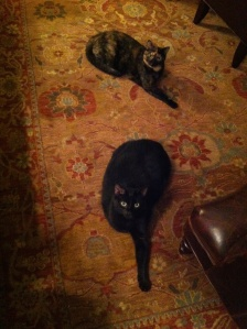 we don't own this rug any more...