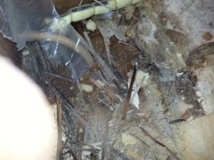 Rotten plywood under tank