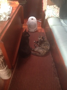 "Cats love heat. This is our ""big guns"" space heater. The regular one is just a low-profile boat heater."
